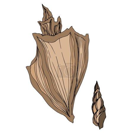 Illustration pour Éléments tropicaux Vector Beach Summer Seashell. Encre beige brune gravée. Illustration isolée de la coquille sur fond blanc. - image libre de droit