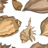 Vector Summer beach seashell tropical elements Brown beige Engr