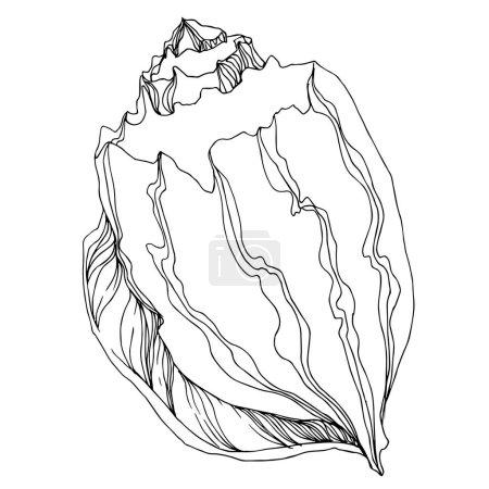 Illustration pour Éléments tropicaux de coquillages de plage d'été de vecteur. Art d'encre gravé noir et blanc. Élément d'illustration de coquille d'isolement sur le fond blanc. - image libre de droit
