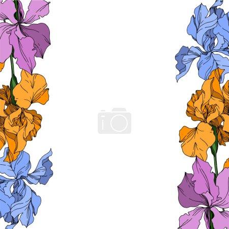 Illustration pour Fleurs botaniques florales de Vector Iris. Fleur sauvage de neige sauvage de feuille de source d'isolement. Art d'encre gravé noir et blanc. Carré d'ornement de bordure de cadre sur le fond blanc. - image libre de droit