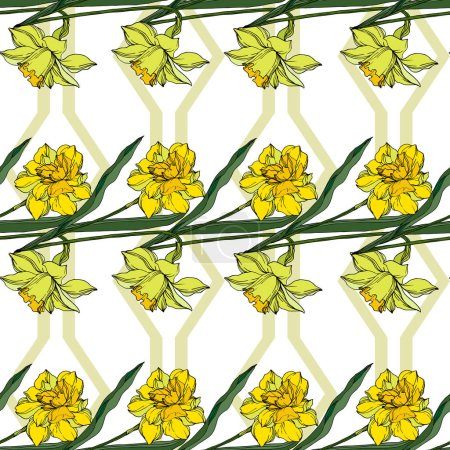 Vector Narcissus floral botanical flowers. Black and white engra