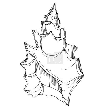 Ilustración de Vector Verano playa de mar elementos tropicales. Arte de tinta grabada en blanco y negro. Elemento ilustrativo de conchas aisladas sobre fondo vita. - Imagen libre de derechos