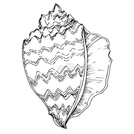 Vector Summer beach seashell tropical elements. Black and white