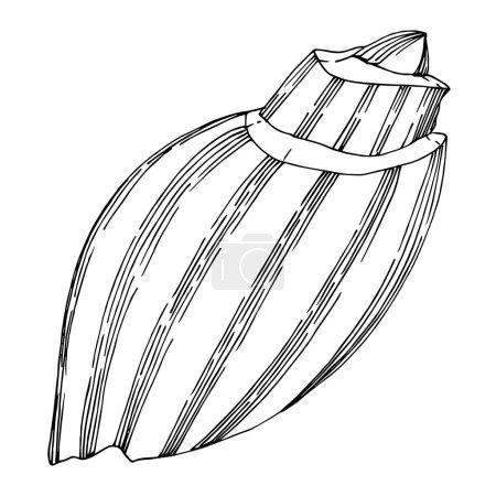 Illustration pour Éléments tropicaux Vector Beach Summer Seashell. Encre noire et blanche gravée. Élément d'illustration de coquillages isolés sur fond vhite. - image libre de droit