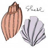 Vector Summer beach seashell tropical elements Black and white