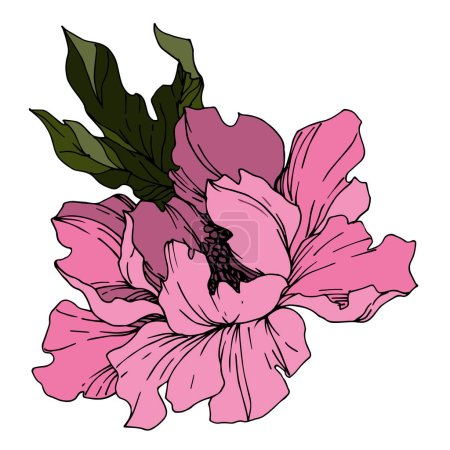 Illustration for Vector Peony floral botanical flowers. Wild spring leaf wildflower isolated. Black and white engraved ink art. Isolated peonies illustration element on white background. - Royalty Free Image