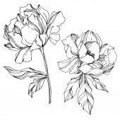 Vector Peony floral botanical flowers Black and white engraved