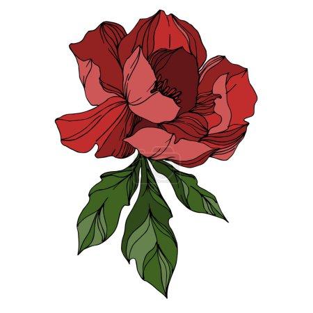 Illustration pour Vector Peony fleurs botaniques florales. Isolement de fleurs sauvages printanières. Encre noire et blanche gravée. Illustration de pivoines isolées sur fond blanc. - image libre de droit