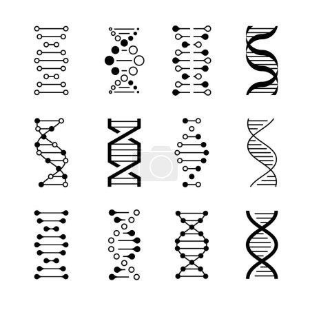 Illustration pour Icônes ADN. Code de structure génétique, modèles moléculaires d'ADN isolés sur fond blanc. Instructions génétiques symboles vectoriels - image libre de droit