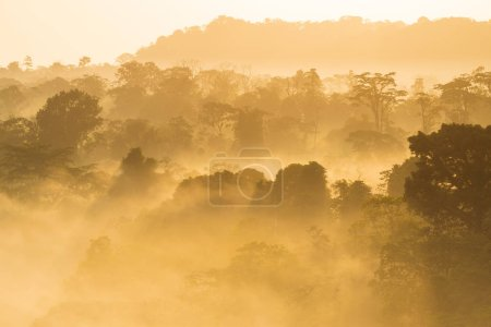 Photo for Picturesque landscape with trees covered with fog - Royalty Free Image