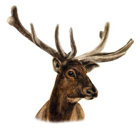 Image d'une tête de cerf avec des bois peints à la main à l'aquarelle isolés sur un fond blanc
