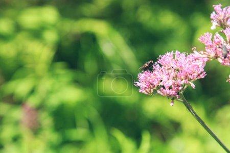 Photo pour Vue de fleur sauvage sur fond de nature floue - image libre de droit