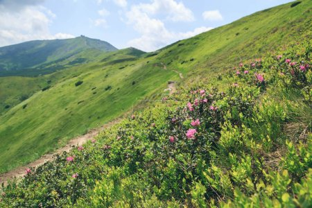 Photo pour Vue panoramique sur le majestueux paysage de montagne Popivan, Carpates, Ukraine - image libre de droit