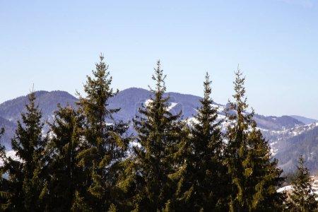 Photo pour Paysage des montagnes près de Verhovyna dans la journée - image libre de droit