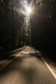 The sun passing between the branches of the trees in the Avenue of the Giants and iluminating the road, California, USA.