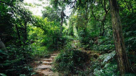 view of tropical asian jungle after rain in summer
