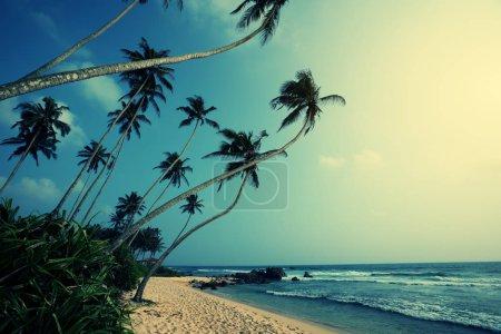 Photo pour Plage tropicale avec cocotiers - image libre de droit