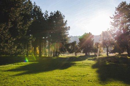 Photo pour Parc pré vert et fond coucher de soleil - image libre de droit