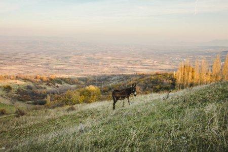 Photo pour Sombre âne marche par meadow, paysage automnal. - image libre de droit