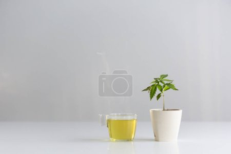 White table with Marijuana plant in pottery. Hot h...