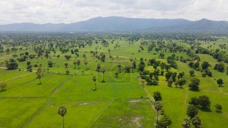 Photo pour Aerial rice field with beautiful landscape and coconut tree, - image libre de droit