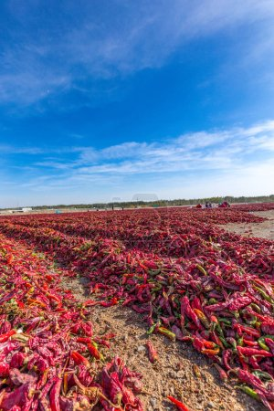 Aerial view of the chili