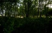 Fireflies are seen at the Jiulong Wetland in Lishui city, east China's Zhejiang province, 6 April 2017