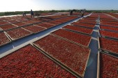 Workers dry goji berries in the sun at Yuli county, Bayingolin Mongol Autonomous Prefecture, northwest China's Xinjiang Uyghur Autonomous Region, 2 July 2017