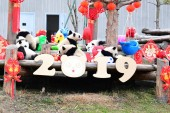 Giant panda cubs born in 2018 play during an event to pay a New Year call to celebrate the upcoming Chinese Lunar New Year, also known as Spring Festival, at the Shenshuping breeding base of Wolong National Nature Reserve in Ngawa Tibetan and Qiang A
