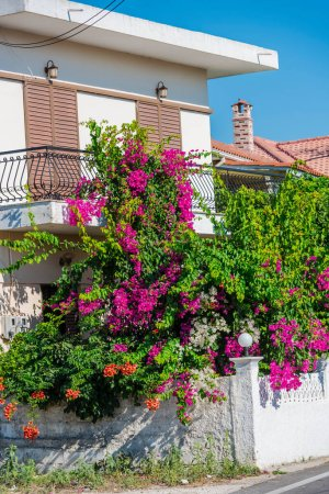 Photo for Mediterranean flowers in Greece - Royalty Free Image