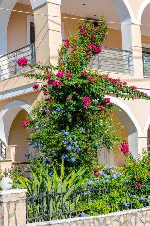 Photo pour Fleurs méditerranéennes en Grèce - image libre de droit