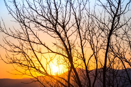 Photo for Silhouette of tree and red sunset at sunrise - Royalty Free Image