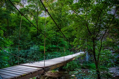 Photo for Wooden bridge in the forest - Royalty Free Image