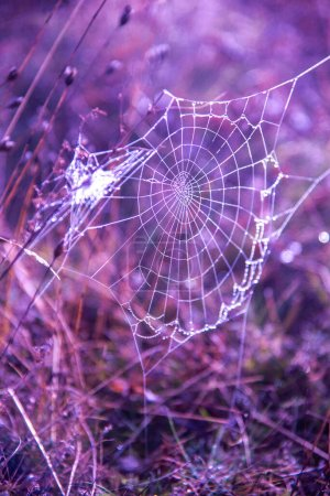 Photo for Spider web with dew drops on the grass - Royalty Free Image