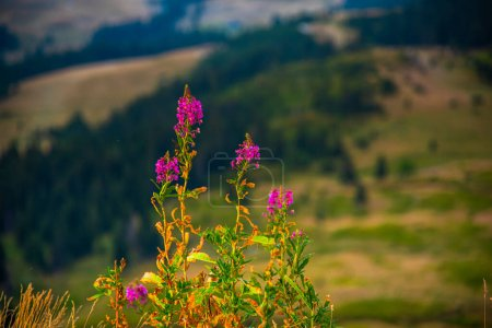 Photo for Beautiful mountain landscape with flowers and green grass - Royalty Free Image