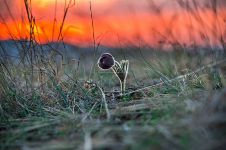 Photo pour Gros plan d'une herbe dans le champ - image libre de droit