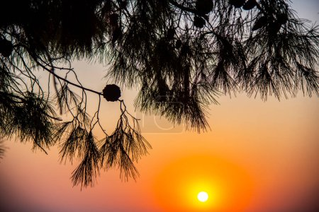 Photo for Silhouette of a tree with sunset on the beach - Royalty Free Image