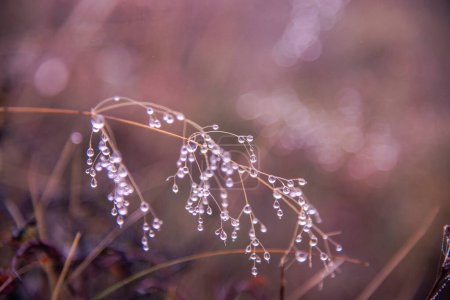 Photo for Dew on the grass in the morning - Royalty Free Image
