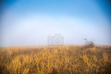 Photo pour Paysage d'automne avec herbe et ciel bleu - image libre de droit