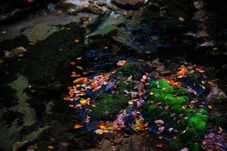 Photo pour Fond abstrait avec des peintures à l'huile colorées et des taches - image libre de droit