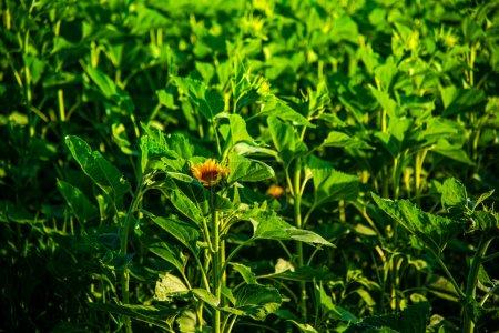Photo pour Herbe verte dans le jardin - image libre de droit