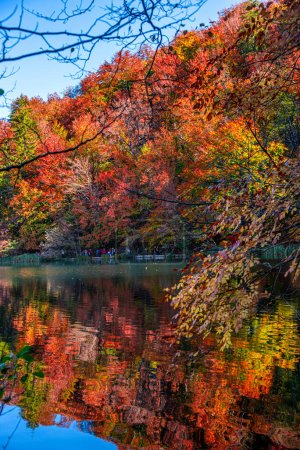 Photo for Autumn landscape with reflection of trees and colorful leaves - Royalty Free Image