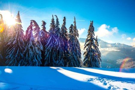 Photo pour Paysage hivernal avec arbres enneigés et montagnes - image libre de droit