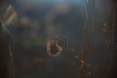 Photo for Dry grass in the park - Royalty Free Image