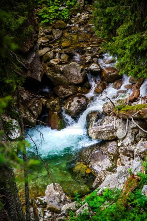 Photo for Mountain stream in the carpathian mountains - Royalty Free Image