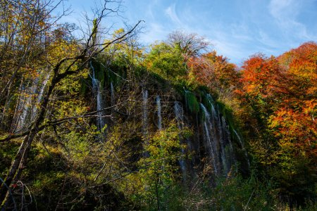 Photo for Autumn landscape with trees and leaves - Royalty Free Image