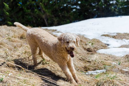 Photo for Cute dog playing in snow - Royalty Free Image
