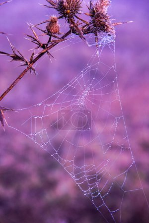 Photo for Spider on the web - Royalty Free Image