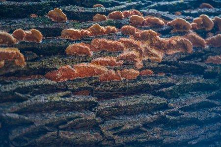 Photo pour Texture des pierres sur la plage - image libre de droit