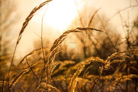 Photo pour Matin hiver dans les montagnes - image libre de droit